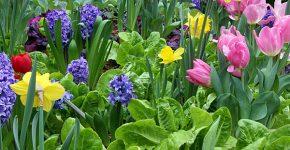 הלוואי שהגינה של כל אחד מאתנו הייתה נראית ככה. צילום אילוסטרציה: סינתיה קידוול, BigStock